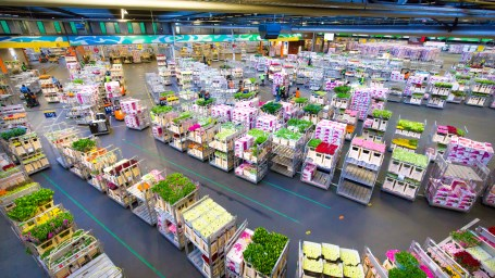 Evert van Helvoort lid-commissaris Royal FloraHolland
